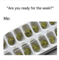 "Always ready 😉 @TheDailyChief420 - 📷: @cannapeople: ""Are you ready for the week?""  Me:  op Always ready 😉 @TheDailyChief420 - 📷: @cannapeople"