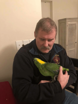 I'm a fire chief. Pet store caught fire and I was able to save this 27 year old Parrot. meet Molly!: Area  galen  115  CIRE DEPT I'm a fire chief. Pet store caught fire and I was able to save this 27 year old Parrot. meet Molly!