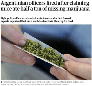 Food, Police, and Getty Images: Argentinian officers fired after claiming  mice ate half a ton of missing marijuana  Eight police officers claimed mice ate the cannabis, but forensic  experts explained that mice would not mistake the drug for food  A The cannabis had been in stored in a police warehouse for two years. But of the 6,000kg that had been  registered, only 5,460kg were found. Photograph: Juan Mabromata/AFP/Getty Images Hmmm…