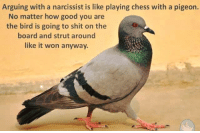 Memes, Birds, and Chess: Arguing with a narcissist is like playing chess with a pigeon.  No matter how good you are  the bird is going to shit on the  board and strut around  like it won anyway