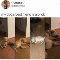 Best Friend, Dogs, and Memes: Ariana  @itsthymee  my dog's best friend is a brick So precious 😍
