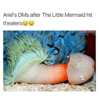 Af, Bruh, and Drake: Ariel's DMs after The Little Mermaid hit  theaters  MSMEMESERVICE Them fish are nasty AF🤷🏻‍♂️ @timsmemeservice AKA TimBeanService follow for more @timsmemeservice - - - *follow @timsmemeservice - - - funnymemes lol lmao bruh petty picoftheday funnyshit thestruggle truth hilarious savage 🙌🏽 kimkardashian drake dead dying funny rotfl savagery 😂 funnyAF InstaComedy ThugLife