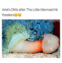 Ariel's DMs after The Little Mermaid hit  theaters These mermen need to chill out 😫 (Follow my homie @wolfgrillz @wolfgrillz for 🔥🔥 memes)