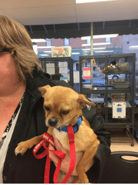 Memes, 🤖, and Ark: ARK  蔡 This male chihuahua was found in a garage on Prentice Ave. If you know him or not please share. Or call Noahs Ark 815-962-2767.