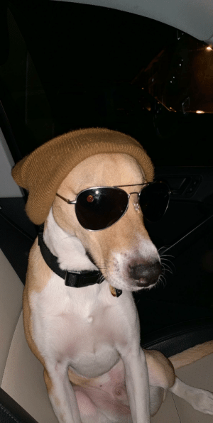 Arlo the Hipster hound