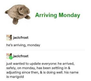 Good, Time, and Monday: Arriving Monday  jaclcfrost  he's arriving, monday  Jacicfrost  just wanted to update everyone: he arrived,  safely, on monday, has been settling in &  adjusting since then, & is doing well. his name  is marigold The only time monday was good