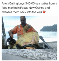 An everyday hero 🙌🏼: Arron Culling buys $40.00 sea turtles from a  food market in Papua New Guinea and  releases them back into the wild An everyday hero 🙌🏼