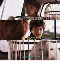 Harry Potter, Memes, and 🤖: arry, I'm going to be hones  I've never flown a car before  potterweekly  re vou freaking  kidding me  Jesus take the wheel ✎✐✎ ↯ ⇢ This post was the first fake scene I posted on this account. This account, I made exactly 1 year ago today. 1 year ago today, my old account was hacked and deleted. Not gonna lie, I really thought I lost all my hard work for good, I thought that there was no way I could get back up a second time. However, obviously I was wrong. Because of my wonderful internet friends, this account - created as a backup account in hopes of getting back my old account - became nearly as successful as my previous one, within a day. 49k followers in a year? I guess I'd consider it a pretty big achievement, but that's not nearly as big of an achievement as the friends I have gained over the years of being online, the connections I've built. Of course, I can't forget you guys, my amazing supporters. Without you all here today, where would I be? Most likely not here with a somewhat successful fake scenes account, so I thank you all, for being here, everyone who's been here, both new and old. Also, I cannot forget the guy who inspired me to create the account I own today, the wonderful @HarrysLetter - the literal master of these things. Though I may not have gotten to 50k today, it's not a big deal, because I'm still SO grateful for all of you that I already have. Love you all heaps 💓 ✎✐✎ Birthday(s) Of The Day 👇🏼🎂🎉 ⇢ [ please notify me if it is your birthday today! ] ✎✐✎ My Other Accounts: ⇢ @TheWizardWeekly - [ account for blended-video-aesthetic edits ] ⇢ @MarvelsWomen - [ co-owned Marvel account ] ⇢ @HPTexts - [ co-owned Harry Potter text messages account ] ⇢ @LumosTutorials - [ co-owned instagram tutorial account ] ✎✐✎ QOTD : Tag some people that you really appreciate, let this be this account's version of Appreciation Day :) AOTD : Everyone tagged in the post, and all of you guys