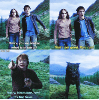 What's your favourite marauder? Mine's Moony❤️🐺 harrypotter: arry you do realise  what tree this is?  Harry, Hermione, run!  It's the Grim!  That's not good. Ron, run What's your favourite marauder? Mine's Moony❤️🐺 harrypotter
