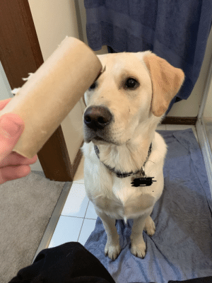 Arthur uses ninja like restraint before savagely destroying his nemesis- the toilet paper roll: Arthur uses ninja like restraint before savagely destroying his nemesis- the toilet paper roll