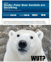 Apparently, Bad, and News: Article:  Study: Polar Bear Genitals are  Shrinking  Charl 9, chef-  Date: 23 August 2006 Time: 08:04 AM ET  FOLLOW US A SHARE Ener g  The icecap may not be the only thing shrinking in the Arctic, The genitals of polar  bears in east Greenland are apparently dwindling in size due to industrial pollutants.  WUT? <p>Bad news for Polar Bears.</p>