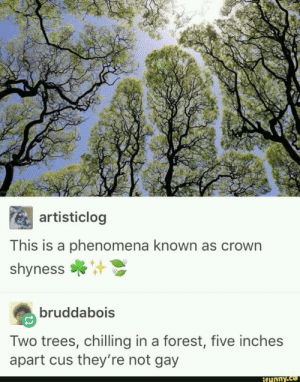 Funny, Okay, and Trees: artisticlog  This is a phenomena known as crown  shyness  bruddabois  Two trees, chilling in a forest, five inches  apart cus they're not gay  funny Two trees that arent gayokay maybe just a little bit