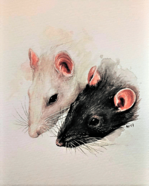 Tumblr, Blog, and Http: artists-everyday:watercolor rats by ABY Art
