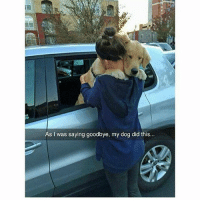 Funny, Ted, and Hilarious: As I was saying goodbye, my dog did this... My cat wouldn't do that (@hilarious.ted)