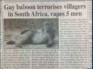 """hmmm: As  pro  tog  201  ede  Gra  fed  experiencing acote anal pains in t  and fatigue. Doctors confirmed  the men have anal cancer. The ble  baboon, which has been nick-con  mamed Somizi travels alone and erm  this, according to animal behav- in  iour specialist is a strange occur  rence because baboons are Ma  known to ravel in troops. One ede  specialist, Lizzie McKenzie said  the baboon might be an outcast Ma  and chased away from it's troop. to  That is why it is travelling alone bef  Men at a village in the North performs sexoal acts on top of but as to the reason it's atacking ist  ir West are leaving in fear over a the terrified victim and leaves only males, it beats me. I have Prt  big male baboon thar likes to One victim, George Chiune said never seen that behaviour in my lig  grope and bonk human males he was coming from the local 20 years in this field,""""she said. bil  4The baboon is said to have at. shebeen when the baboon at- When journalists visited the vil- ta  ytacked more than six men in the tacked him and pinned him lage, all male school kids were Gr  rpast week and what's baffling the down. I thooghs it wanted to kill said to be wearing dresses as a wi  illagers is the fact that the ba me but realized it was after my preventative measure until the the  Gay baboon terrorises villagers  in South Africa, rapes 5 men  es hmmm"""