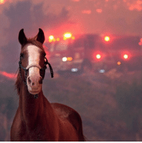 As wildfires blaze across California, it's not just humans who've had to evacuate their homes. Some evacuations were so urgent that many people were unable to return home for their pets and other animals. Dedicated accounts, groups and hashtags have been set up by volunteers to help reunite pets with their owners. Learn more about the rescue effort via the link in our bio. californiawildfires wildfire california bbcnews: As wildfires blaze across California, it's not just humans who've had to evacuate their homes. Some evacuations were so urgent that many people were unable to return home for their pets and other animals. Dedicated accounts, groups and hashtags have been set up by volunteers to help reunite pets with their owners. Learn more about the rescue effort via the link in our bio. californiawildfires wildfire california bbcnews