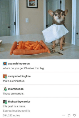 A parallel universe post to the one about the cheetah wanting Cheetos: asaawhiteperson  where do you get Cheetos that big  swaysclothingline  that's a chihuahua  miamiacoda  Those are carrots.  thehealthywarrion  this post is a mess.  Source:ilovebrucewillis  594,222 notes A parallel universe post to the one about the cheetah wanting Cheetos