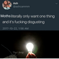 Ash, Fucking, and Dank Memes: Ash  @ashcammm  Moths literally only want one thing  and it's fucking disgusting  2017-10-22, 1:56 AM  The Låmp