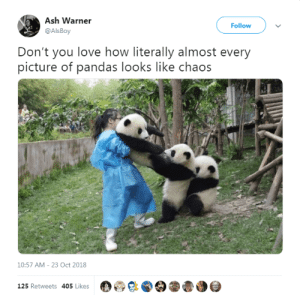 Ash, Love, and Animal: Ash Warner  @AlsBoy  Follow  Don't you love how literally almost every  picture of pandas looks like chaos  10:57 AM-23 Oct 2018  125 Retweets 405 Likes30 16 Animal Tweets That Made Us Laugh This Week (October 29, 2018) - I Can Has Cheezburger?