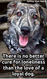 Memes, Loneliness, and 🤖: Ashley Alue Hance  There is no better  cure for loneliness  than the love of a  loyal dog. SO true!