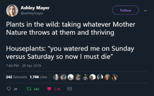 "Nature, Wild, and Sunday: Ashley Mayer  @ashleymayer  Follow  Plants in the wild: taking whatever Mother  Nature throws at them and thriving  Houseplants: ""you watered me on Sunday  versus Saturday so now I must die""  7:44 PM -28 Apr 2019  ş롤@O,ê  po®運  242 Retweets 1,708 Likes Houseplants"