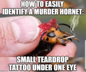 Asian Giant Hornets are still the rage if you are an entomologist in the US right now. Enjoy this dump of all the murder hornet memes: Asian Giant Hornets are still the rage if you are an entomologist in the US right now. Enjoy this dump of all the murder hornet memes