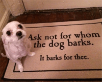 Funny, Mind, and Ask: Ask not for whom  the dog barks.  It barks for thee. This just blew my mind