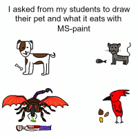 Paint, Pet, and Ms Paint: | asked from my students to draw  their pet and what it eats with  MS-paint it comes https://t.co/HFUWpPno6l