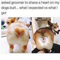 THE WAY HIS ASSHOLE IS SHAPED MAKES ME SO UNCOMFORTABLE also I made a smoothie and I'm going on a walk in the woods I'm at peace: asked groomer to shave a heart on my  dogs butt... what expected vs what I  got THE WAY HIS ASSHOLE IS SHAPED MAKES ME SO UNCOMFORTABLE also I made a smoothie and I'm going on a walk in the woods I'm at peace