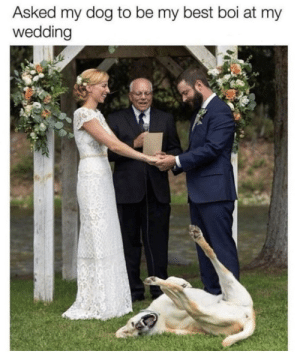 Memes, Best, and Wedding: Asked my dog to be my best boi at my  wedding Wedding Day via /r/memes https://ift.tt/2VlVmOm