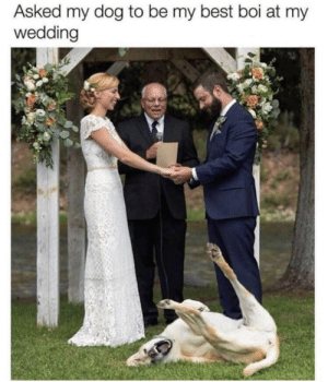Memes, Best, and Wedding: Asked my dog to be my best boi at my  wedding https://t.co/M9wgj5xmPg