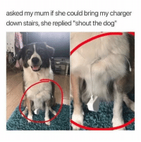 """Memes, 🤖, and Dog: asked my mum if she could bring my charger  down stairs, she replied """"shout the dog"""" ahaha"""