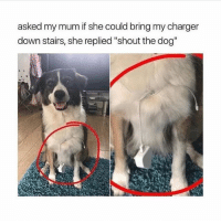 "Girl, Laziness, and Dog: asked my mum if she could bring my charger  down stairs, she replied ""shout the dog"" The level of laziness I aspire to 🙏🏼 Comment if u relate"