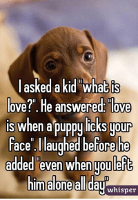 "Puppies: askedakid what is  ove?"". He answered: love  is when a puppy licks uour  ace laughed before he  added even when uou left  m alone all dayhisner Puppies"