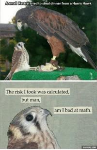 9gag, Bad, and Dank: Asmall Kestrel tried to steal dinner from a Harris Hawk  The risk I took was calculated,  but man,  am I bad at math.  VIA 9GAG.COM I tried so hard and got so far, but in the end... http://9gag.com/gag/a7dZq4w?ref=fbp