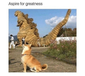 Keep dreaming pupper!: Aspire for greatness Keep dreaming pupper!