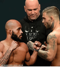 Boxing, Memes, and Ufc: ASSHOPPED AS IT GETS @mightymouse125 vs @cody_nolove How would this fight go down? Would you buy the PPV? UFC MMA ChampVsChamp AsRealAsItGets JustBleed BJJ JiuJitsu Boxing Wrestling MuayThai Sambo Judo TaeKwonDo Karate