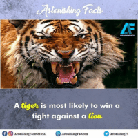 Facts, Memes, and Lion: ASTONISHING FACTS  A tiger is most likely to win a  fight against a lion,  Of 9 AstonishingFactsofficial  AstonishingFact.com  Astonishing Did you know? rvcjinsta