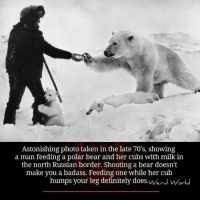 Astonishing: Astonishing photo taken in the late 70's, showing  a man feeding a polar bear and her cubs with milk in  the north Russían border. Shooting a bear doesn't  make you a badass. Feeding one while her cub  humps your leg definitely does.Weird wWorl