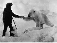 Astonishing photo taken in the late 70s, showing a man feeding a polar bear and her cubs with milk in the North Russia border. Shooting a bear doesn't make you a badass. Feeding one while her cub humps your leg definitely does.: Astonishing photo taken in the late 70s, showing a man feeding a polar bear and her cubs with milk in the North Russia border. Shooting a bear doesn't make you a badass. Feeding one while her cub humps your leg definitely does.