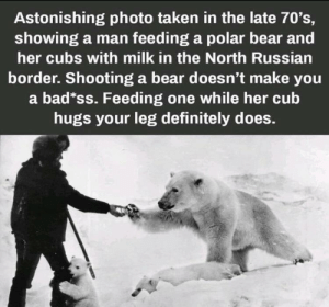awesomacious:  And that's a fact!: Astonishing photo taken in the late 70's,  showing a man feeding a polar bear and  her cubs with milk in the North Russian  border. Shooting a bear doesn't make you  a bad*ss. Feeding one while her cub  hugs your leg definitely does. awesomacious:  And that's a fact!