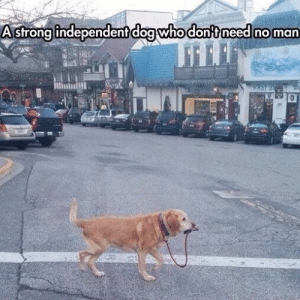 Animals, Funny, and Memes: Astrong independent dog who don't need no man 42 Funny Dog Memes That'll Make Your Day! - Lovely Animals World