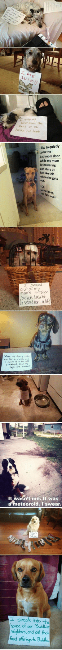 Funny Dog Shaming - notice how you never see any cat shaming... This is clearly because they have no shame.: AT  00 1I  ooser de the  bzats us -foot  llike to quietly  e open the  bathroom door  while my mum  is showering  and stare at  her like this  when she gets  out  over  but ofnm  mom's in-  oicyce boskeh  it Seare d her... lot  When my family tkes  It wasn't me. It was  eteoroid. I swear.  sneak into the  house of our  heighbors, and cat thei  food offerings to Buddha Funny Dog Shaming - notice how you never see any cat shaming... This is clearly because they have no shame.