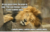 Lion: At any given time, the urge to  sing The Lion Sleeps Tonight  is just a whim away  a whim away, a Whimawayba whimaway