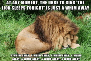 "Tumblr, Blog, and Http: ..AT ANY-MOMENT, THE URGE TO SING THE  LION SLEEPS TONIGHT IS JUST A WHIM AWAY  AWHIMAWAY5AWHIM AWAY""A:WHIMAWAYSA WHIM srsfunny:The Urge To Sing"