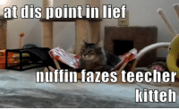 """Omg, Teacher, and Tumblr: at dis point in lief  nuffin fazes teeche  Kitteh <p><a href=""""https://omg-images.tumblr.com/post/161498712937/it-takes-a-lot-to-faze-the-teacher"""" class=""""tumblr_blog"""">omg-images</a>:</p>  <blockquote><p>it takes a lot to faze the teacher</p></blockquote>"""