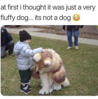 Memes, Thought, and 🤖: at first i thought it was just a very  fluffy dog... its not a dog Lmaoo 🤔 @thehoodtube
