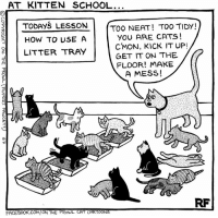 Memes, Cartoon, and Cartoons: AT KITTEN SCHOOL...  TODAYS LESSON  TOO NEAT! TOO TIDY!  YOU ARE CATS!  HOW TO USE A  CMON, KICK IT UP!  z LITTER TRAY  GET IT ON THE  FLOOR! MAKE  A MESS!  FACEBOOK COM ON THE PROWL CAT CARTOONS