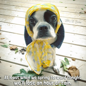Memes, Boston, and Rain: At least when we spring forward tonight  we'll lose an hour of rdin Remember to SPRING FORWARD your clocks tonight as tomorrow is The Start of Daylight Time ⏰ We are ready for spring and less rain in Lola B. Boston's part of the country.