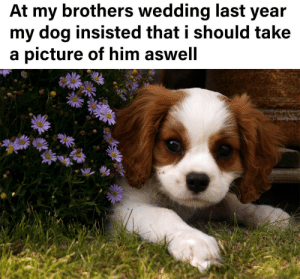 Cutest dog ever: At my brothers wedding last year  my dog insisted that i should take  a picture of him aswell Cutest dog ever